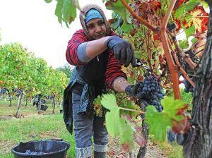 酿造葡萄酒