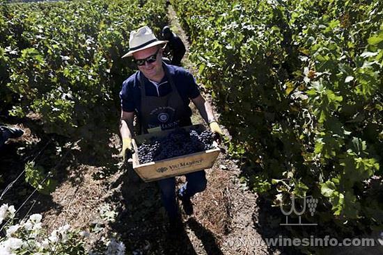 chile-tourist-grape-harvest_7fbbb514-327f-11e8-8c5f-3c6cc031651e.jpg