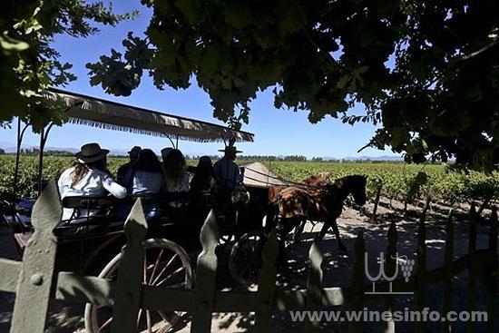 chile-tourist-grape-harvest_776613fa-327f-11e8-8c5f-3c6cc031651e.jpg